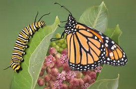 Butterfly and Caterpillar