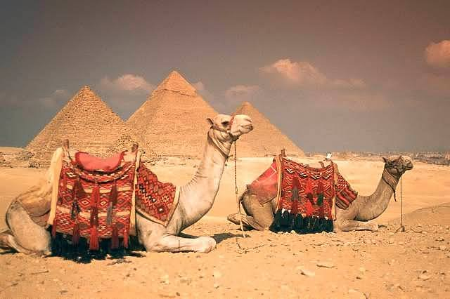 Egypt Tour Camels-Sitting-Near-Egyptian-Pyramids